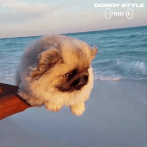 This fluffy Pekingese dog will make your day! 🐶: DOGGY STYLE  EPISODE 28 This fluffy Pekingese dog will make your day! 🐶