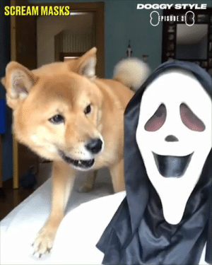 Dank, Doggy Style, and Dogs: DOGGY STYLE  SCREAM MASKS  PISODE 2 Dogs are not afraid to tackle anything, no matter how big or small. Here's everything we've seen them take on over the last year... 😂🐶