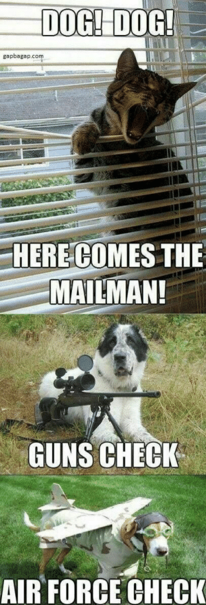 Animals, Dogs, and Guns: DOGI DOG  gapbagap.com  HERE COMES THE  MAILMAN!  GUNS CHECK  AIR FORCE CHECK Dog Memes Of The Day 32 Pics – Ep37 #dogs #doglovers #lovelyanimalsworld - Lovely Animals World