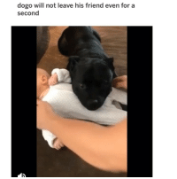 Bless Up, Dogs, and Love: dogo will not leave his friend even for a  second I KNOW ALL OF UR BUTTS TIGHTENED UP ALL WORRIED THAT DOGGO WAS GON GO DOGGO ON THIS LIL HUMAN WELL BISH GUESS 👏 WHAT 👏. DOGGO *DID* GO DOGGO. AND DOGGO SHOWERED THIS LIL HUMAN WITH LOVE, WARMTH AND SMOTHERLY GOODNESS GRACIOUSNESS BECAUSE THAT'S WTF DOGS WAS BUILT TO DO BLESS UP 😍😂😂