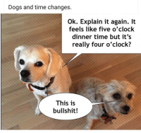 Dog: Dogs and time changes  Ok. Explain it again. It  feels like five o'clock  dinner time but it's  really four o'clock?  This is  bullshit!
