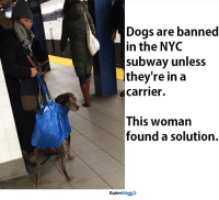 Memes, Subway, and 🤖: Dogs are banned  in the NYC  subway unless  they're in a  Carrier.  This woman  found a solution.  Talent  Explore She is my new hero <3