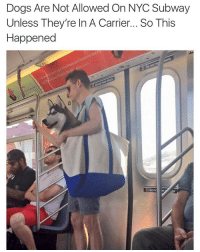 Dogs, Funny, and Meme: Dogs Are Not Allowed On NYC Subway  Unless They're In A Carrier... So This  Happened  DDonc  in (@_kevinboner )