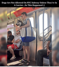 Memes, Subway, and 🤖: Dogs Are Not Allowed on NYC Subway Unless They're In  A Carrier...So This Happened