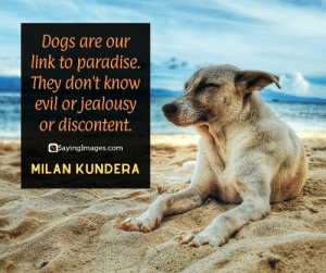 30 Pet Quotes on Love That Has No Boundaries #sayingimages #petquotes #quotes: Dogs are our  link to paradise.  |They don't know  evil or jealousy  or discontent.  SayingImages.com  MILAN KUNDERA 30 Pet Quotes on Love That Has No Boundaries #sayingimages #petquotes #quotes