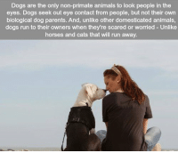 https://t.co/lMntLJXFHc: Dogs are the only non-primate animals to look people in the  eyes. Dogs seek out eye contact from people, but not their own  biological dog parents. And, unlike other domesticated animals,  dogs run to their owners when they're scared or worried Unlike  horses and cats that will run away. https://t.co/lMntLJXFHc
