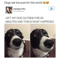 Oh my god😍 - 100% free iTunes gift card link in bio! Go redeem yours now💕💳: Dogs are too pure for this world  Candyce Wu  @candy cewu  LEFT MY DOG OUTSIDE FOR 30  MINUTES AND THIS IS WHAT HAPPENED Oh my god😍 - 100% free iTunes gift card link in bio! Go redeem yours now💕💳