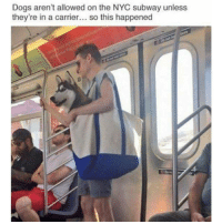 Funny, Nyc Subway, and Carrier: Dogs aren't allowed on the NYC subway unless  they're in a carrier... so this happened @theladbible is my favorite account right now