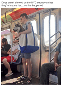 "Dogs, Reddit, and Subway: Dogs aren't allowed on the NYC subway unless  they're in a carrier... so this happened  Donc n <p><a class=""tumblr_blog"" href=""http://tastefullyoffensive.tumblr.com/post/147949385288"" target=""_blank"">tastefullyoffensive</a>:</p> <blockquote> <p>(via <a href=""https://twitter.com/alexromano/status/755784654402314241/photo/1?ref_src=twsrc%5Etfw"" title="""" target=""_blank"">Alex Romano</a> / <a href=""https://www.reddit.com/user/dev_maxpayne"" target=""_blank"">dev_maxpayne</a>)</p> </blockquote>"