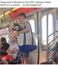 Dank, Dogs, and Subway: Dogs aren't allowed on the NYC subway unless  they're in a carrier  so this happened 😂😂😂