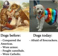 Memes, Catholic, and 🤖: Dogs before  Conquered the  Americas  Wore armor.  Fought cannibals.  Were Catholic.  Dogs today:  Afraid of firecrackers. I don't care I still love them all.