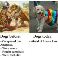Memes, Catholic, and 🤖: Dogs before:  Conquered the  Americas.  Wore armor.  Fought cannibals.  Were Catholic.  Dogs today:  Afraid of firecrackers. Awe doggo Pupper Ha ha. I'm weak flatlined dead pettypost nochill teamnoharmdone noharmdone