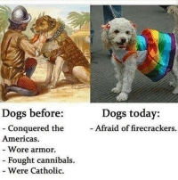 Dank, Catholic, and 🤖: Dogs before  Conquered the  Americas.  Wore armor.  Fought cannibals.  Were Catholic.  Dogs today:  Afraid of firecrackers Damn SJW's.... they ruined DOGS! ~Josephus
