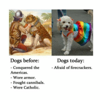 Memes, 🤖, and Dog: Dogs before  Conquered the  Americas.  Wore armor.  Fought cannibals.  Were Catholic.  Dogs today:  Afraid of firecrackers. DOGS ARE SOCUTE