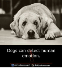 Dogs, Memes, and 🤖: Dogs can detect human  emotion.  /didyouknowpagel @didyouknowpage