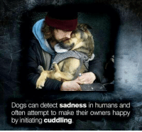 #NationalHuggingDay  ❤️🐾: Dogs can detect sadness in humans and  often attempt to make their owners happy  by initiating cuddling #NationalHuggingDay  ❤️🐾