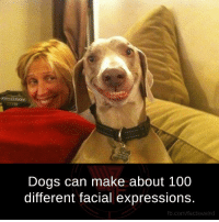 Weird Memes: Dogs can make about 100  different facial expressions.  fb.com/facts Weird