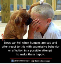 submissive: Dogs can tell when humans are sad and  often react to this with submissive behavior  or affection in a possible attempt  to make them happy  /didyouknowpagel@didyouknowpage