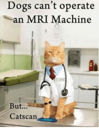 Boo! Hiss! What a terrible joke!: Dogs can't operate  an MRI Machine  But...  Cats can Boo! Hiss! What a terrible joke!