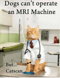 You have cat to be kitten me 😂: Dogs can't operate  an MRI Machine  But...  Cats can You have cat to be kitten me 😂