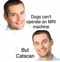 Gotta be kitten me 😂😂 https://t.co/Pl5sxorqoF: Dogs can't  operate an MRI  machine  But  Catscan Gotta be kitten me 😂😂 https://t.co/Pl5sxorqoF