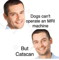 Instagram: @punsonly Twitter: @puns_only: Dogs can't  operate an MRI  machine  But  Catscan Instagram: @punsonly Twitter: @puns_only