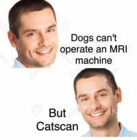 Snapchat;    Dankmemesgang 🔥🔥🔥🔥: Dogs can't  operate an MRI  machine  But  Catscan Snapchat;    Dankmemesgang 🔥🔥🔥🔥