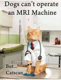 You have cat to be kitten me 😂 https://t.co/kA3UC2qaBP: Dogs can't operate  an MRI Machine  DR. MORRIS  But...  Catscan You have cat to be kitten me 😂 https://t.co/kA3UC2qaBP