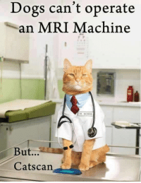 mri: Dogs can't operate  an MRI Machine  DR. MORRIS  But...  Catscan