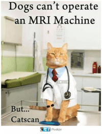 mri: Dogs can't operate  an MRI Machine  DR MORRIS  But...  Catscan  FPostize