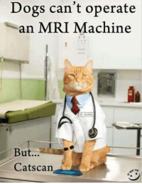 hehe :): Dogs can't operate  an MRI Machine  MORRIS  But...  Cats can hehe :)