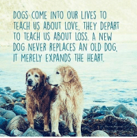 Yes it certainly does Share if you think so: DOGS COME INTO OUR LIVES TO  TEACH US ABOUT LOVE. THEY DEPART  TO TEACH US ABOUT LOSS A NEW  DOG NEVER REPLACES AN OLD DOG.  IT MERELY EXPANDS THE HEART Yes it certainly does Share if you think so