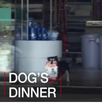 Dogs, Food, and Memes: DOG'S  DINNER 27 JUN: Pituco, a dog blind in one eye, visits a local pet shop in the town of Paraí, Brazil, almost daily to carry home his own pet food. His owners pay later. For more dog stories go to: bbc.in-uglydog Brazil Dogs DogsOfInstagram Pooch PetShop Brazil Parai Pets BBCShorts BBCNews @BBCNews