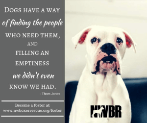 Dogs, Memes, and Boxer: DOGS HAVE A WAY  of finding the people  WHO NEED THEM,  AND  FILLING AN  EMPTINESS  we didn't even  KNOW WE HAD.  - Thom Jones  WBR  Become a foster at  www.nwboxerrescue.org/foster Northwest Boxer Rescue is a 100% foster based organization and that is why we need you! If you have questions or are unsure about fostering, please reach out. To fill out a foster application please follow this link: https://www.nwboxerrescue.org/foster