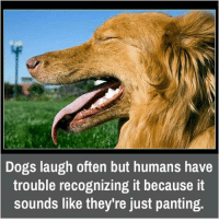 Dog Laughing: Dogs laugh often but humans have  trouble recognizing it because it  sounds like they're just panting