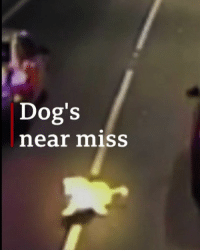 Cars, Dogs, and Memes: Dog's  near miss What a lucky boy. This dog took a nasty detour while riding in its owner's car with the windows down. The pooch flew out of the vehicle in a busy motorway tunnel but luckily the other drivers were alert and managed to avoid hitting it. It's believed the car's window was kept open to help the dog keep cool in hot weather, but authorities say it's important to make sure the dog can't get out of the car when it's moving. Phew! dog luck australia car doggo BBCNews