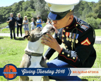 Community, Lawyer, and Memes: Dogs on Deployment  giving Juesday 2016 bit.ly/dod-GT2016  Photo b  Gilroy Register Did you know that Dogs on Deployment is a 100% volunteer ran organization? So when we say we would not exist without our volunteers, we really mean it.   > > > bit.ly/dod-GT2016  So who are we? We are active duty military, retired military and reservists. We are military wives, parents, brothers and sisters. We are parents, fur parents, aunts and uncles. We are vet techs, teachers, flight attendants and lawyers. We work on Dogs on Deployment in between meetings, at night and on the weekends. We have a love of pets, a sense of patriotism and support our troops. We are leaders in our communities and spread the word about Dogs on Deployment proudly and to everyone we can. We are the heart and soul of Dogs on Deployment.   It is through the support of our generous donors that we are able to keep our mission of providing peace of mind to military member's concerning their pets. Make a difference today!  > > > bit.ly/dod-GT2016