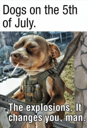 Dogs, Never, and War: Dogs on the 5th  of July.  The explosions. It  changes you, man. War never changes...