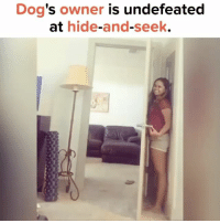 Follow me (@Crelube) for more videos like this ❤️ Haha - Tag a Friend👇🏽 Crelube dogs cute girl: Dog's owner is undefeated  at hide-and-seek. Follow me (@Crelube) for more videos like this ❤️ Haha - Tag a Friend👇🏽 Crelube dogs cute girl