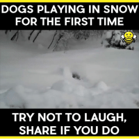 Bahahahahaha!!!! #EnjoyingLife #HavingFun: DOGS PLAYING IN SNOW  FOR THE FIRST TIME  TRY NOT TO LAUGH,  SHARE IF YOU DO Bahahahahaha!!!! #EnjoyingLife #HavingFun