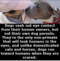 https://t.co/V5bCP5ITEg: Dogs seek out eye contact  from their human owners, but  not their own dog parents.  They're the only non-primate  that will look humans in the  eyes, and unlike domesticated  cats and horses, dogs run  toward humans when they are  scared https://t.co/V5bCP5ITEg