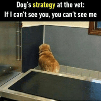 9gag, Cute, and Dogs: Dog's strategy at the vet:  If l can't see you, you can't see me Well played, Jack. Follow @9gag for more cute memes. 9gag doggo vet scary