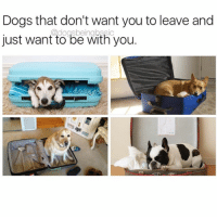 Dogs, Memes, and 🤖: Dogs that don't want you to leave and  just want to be with you.  @dogsbeingbasic Please bring me.-dog