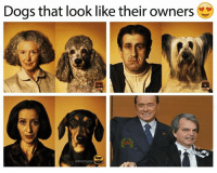 Dogs, Memes, and Duke: Dogs that look like their owners -Sir Duke