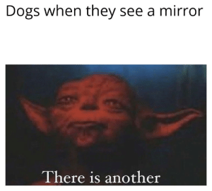 Dogs, Mirror, and Ketamine: Dogs when they see a mirror  There is another Consume ketamine,I must