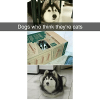 Cats, Dogs, and Memes: Dogs who think they're cats The cats are not amused 🤣