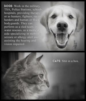 Poor cat: DOGS: Work in the military  TSA, Police Stations, schools,  hospitals, providing therapy,  or as hunters, fighters, racers,  herders and human or flock  bodyguards. They can  perform as a sled team, in  water rescues, as a medical  aide specializing in mobility  seizure or allergy alert and  assisting the hearing and  vision impaired.  GRUNTWOR  CATS: Shit in a box. Poor cat