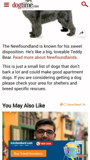 Newfoundland Is Known For His Sweet Disposition He S Like A Loveable Teddy Bear Read More About Newfoundlands This Just Small List Of Dogs That