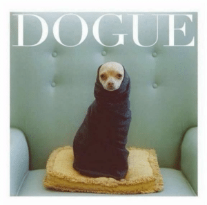 Animals, Funny, and Memes: DOGUE 42 Funny Dog Memes That'll Make Your Day! - Lovely Animals World