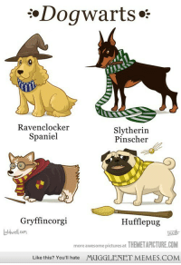 """<p>Dogwarts! <a href=""""http://ift.tt/14MzzzT"""">http://ift.tt/14MzzzT</a></p>: .Dogwarts**  Ravenclocker  Spaniel  Slytherin  Pinscher  Gryffincorgi  Hufflepug  oldwell.com  more awesome pictures at THEMETAPICTURE.COM  Like this? You'll hate MUGGLENET MEMES.COM <p>Dogwarts! <a href=""""http://ift.tt/14MzzzT"""">http://ift.tt/14MzzzT</a></p>"""